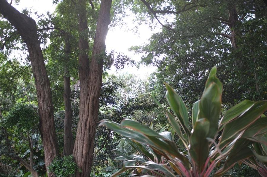 Botanic Plants