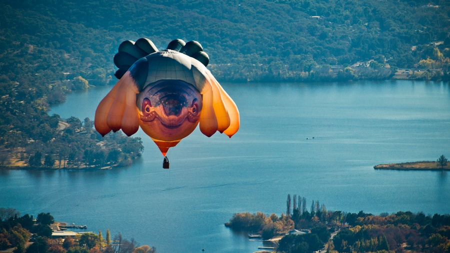 The Skywhale